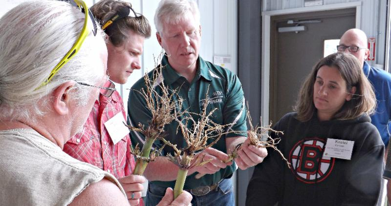 Research sciencetist shows how to score roots on corn plants