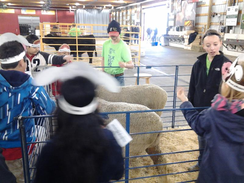 Students learn about sheep at the state fairgrounds