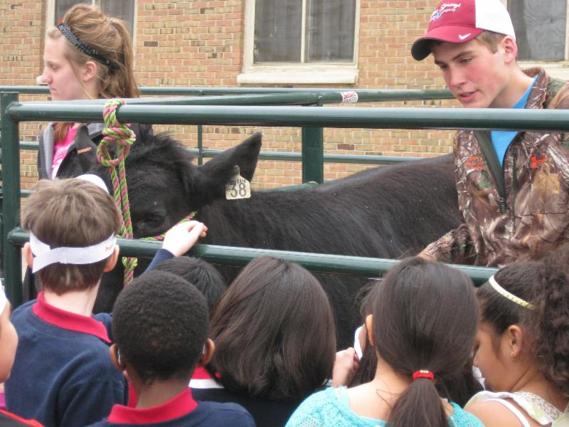Morris students describe beef cattle to St. Paul students