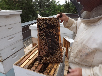 Kevin WIllimas showing bee hive