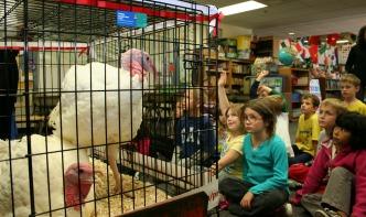 Presidential turkey in 2nd grade classroom