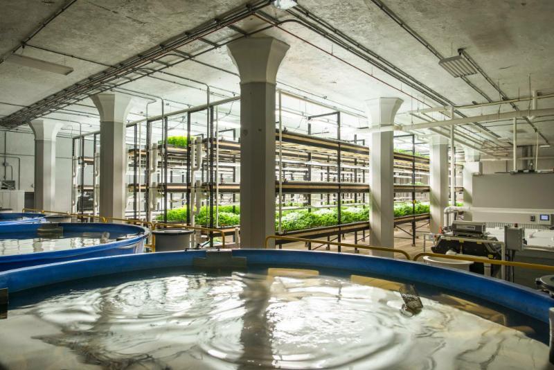 Urgan organics aquaponics system
