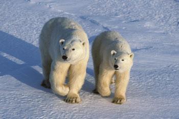 Two Bears_DG