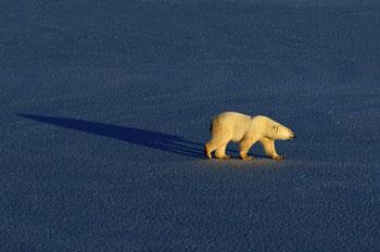 Lone Bear-VA