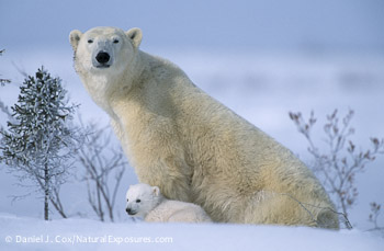 Cub and Mom