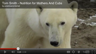 Mom and Cub Video