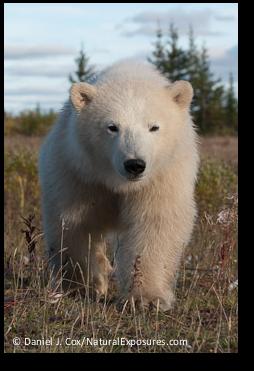 Nearing Bear