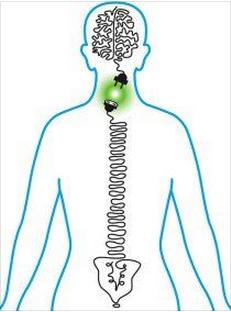 Nerve system plug