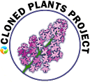 Cloned Plant Project Logo