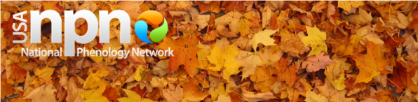 Image of fallen leaves and USA-NPN logo.