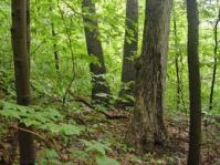 Image of forest understory