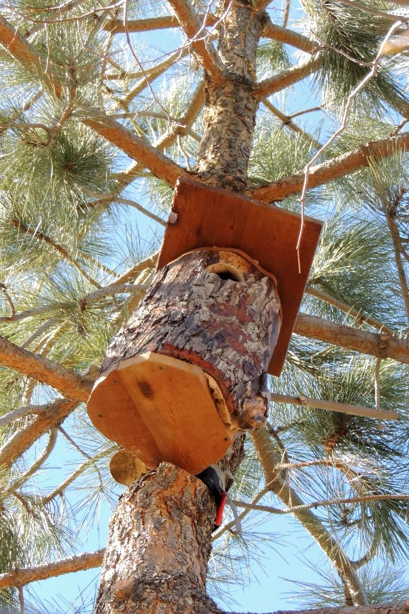 Screech Owl House Plans Free