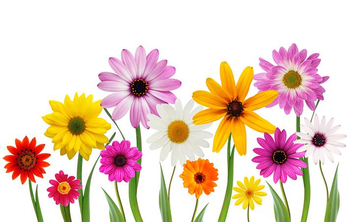 Spring VI
