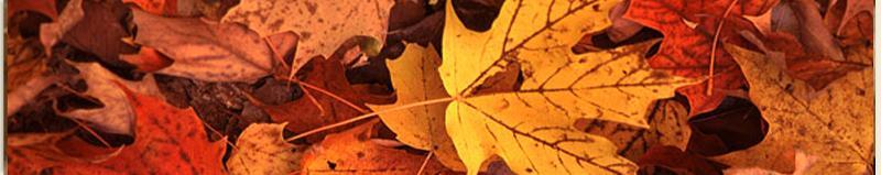 Fall 12 banner 3