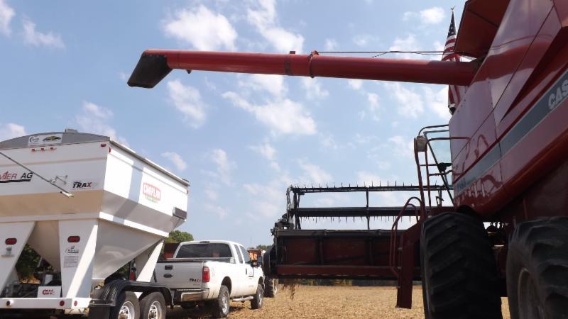 combine in soy bean field