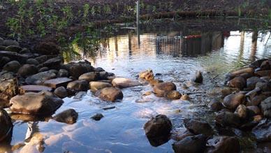 newly restored pond