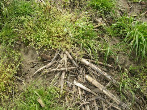 no-till/cover crops