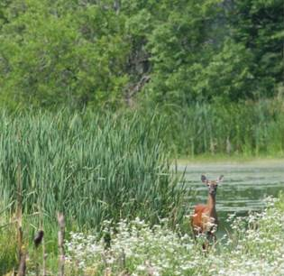 Wetland easement site northern Indiana (Photo: NRCS)