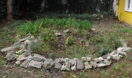 A rain garden at an Indianapolis home.