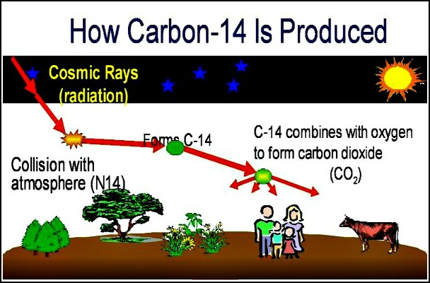 c-14 generation diagram