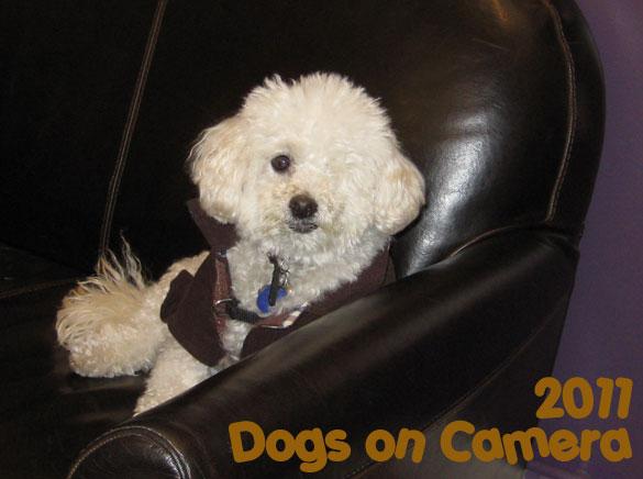 Rudy - a Dog on Camera