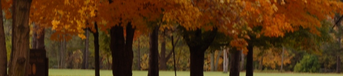 trees banner