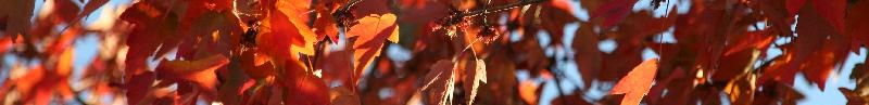 orange leaves banner