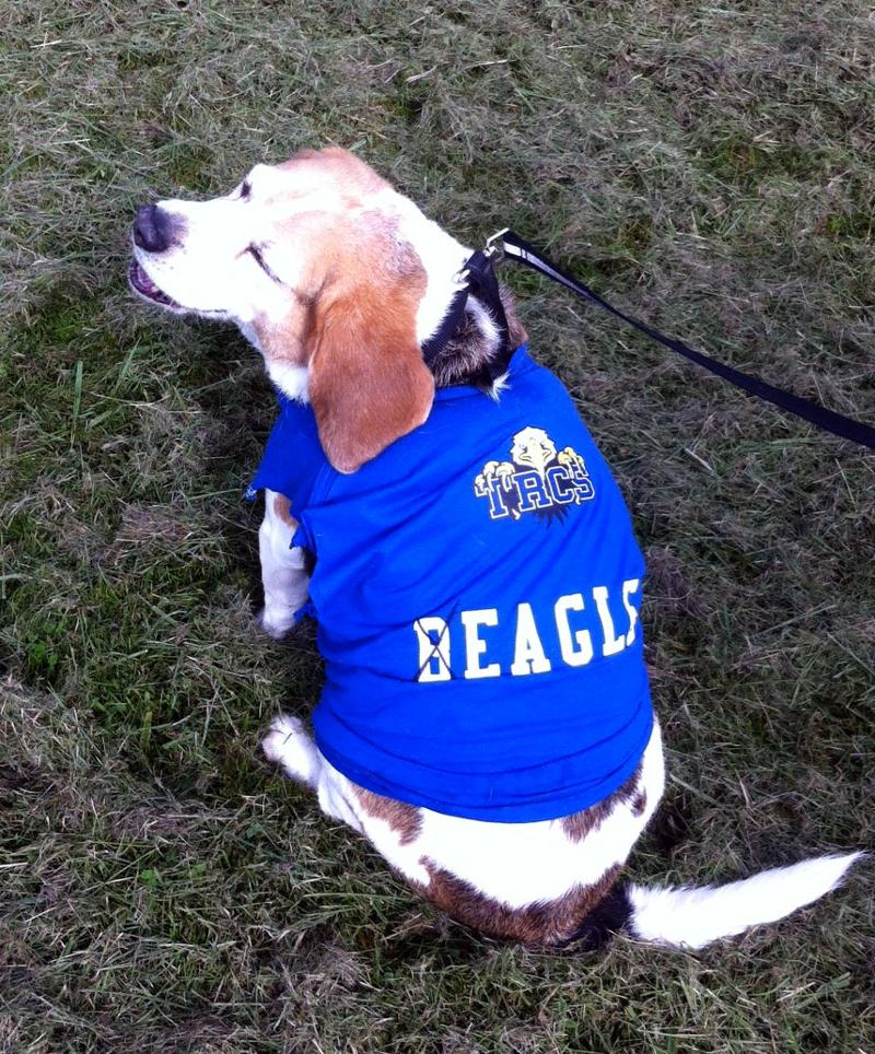 Cooper-Beagle.