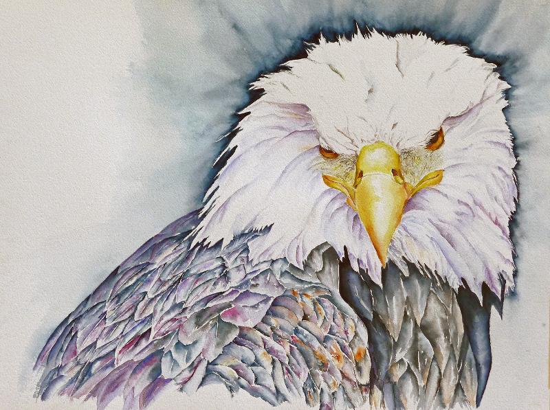 Danitas eagle compromised