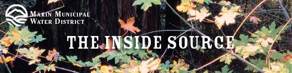 TISbnr_redwoods_oaks