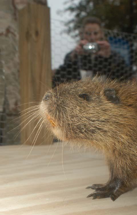 Pierre Shadeaux, the Cajun Groundhog