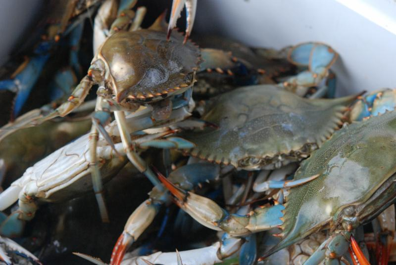 Louisiana blue crab at the Delcambre Seafood and Farmers Market