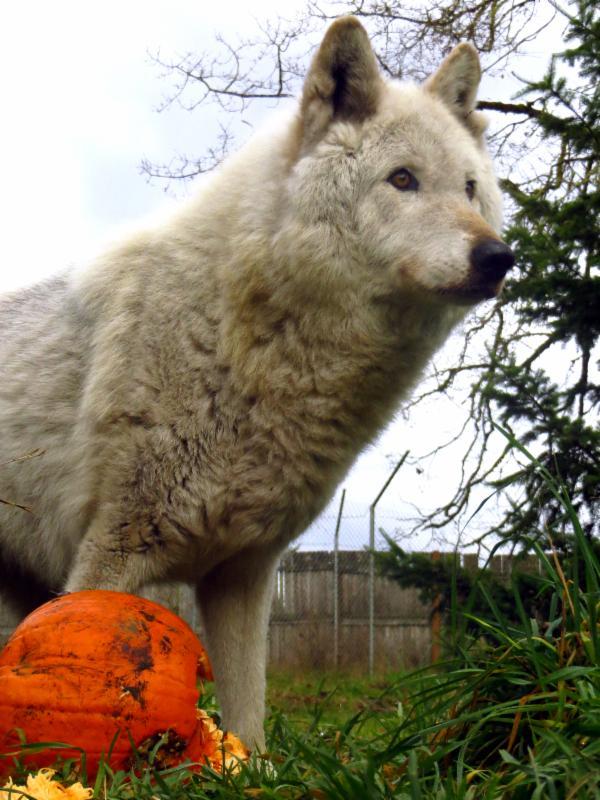 Jessie with pumpkin