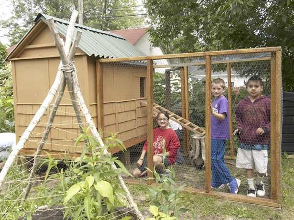kids in coop