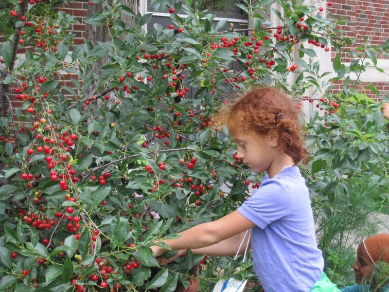 Kyra Picking Cherries