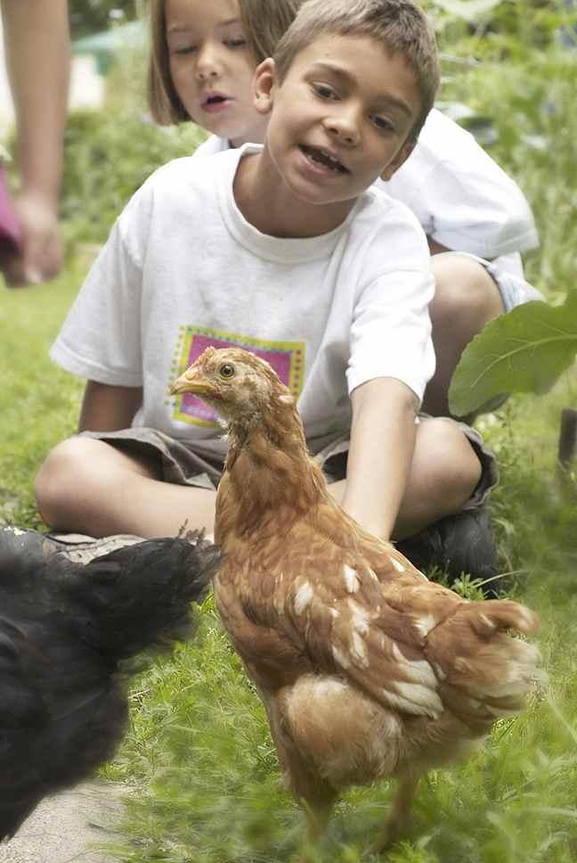 kids with chicken