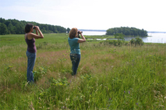 Birding on Great Bay's shores