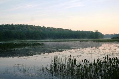 MMRG wetland