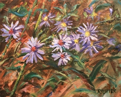 Aromatic Aster Study