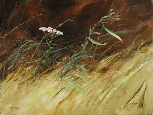 Wind Whipped Yarrow