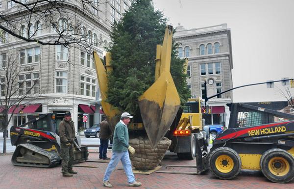 Penn Square Tree