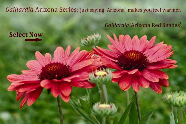 Arizona Series