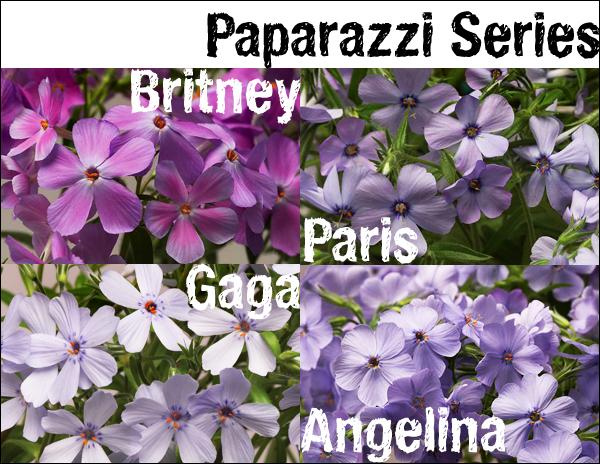 Paparazzi Series