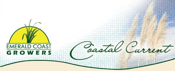 Coastal Current