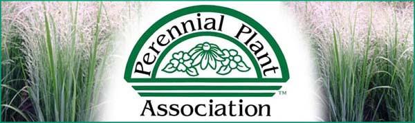Panicum Northwind PPA Plant of the Year