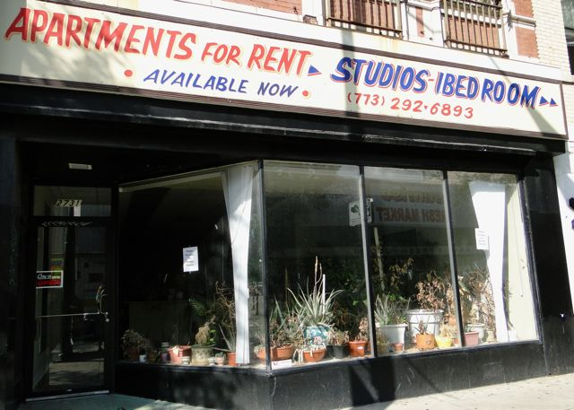 dying plants storefront
