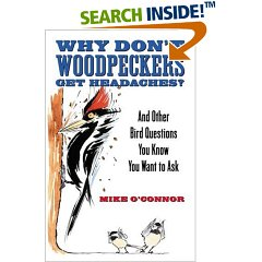 woodpecker headache
