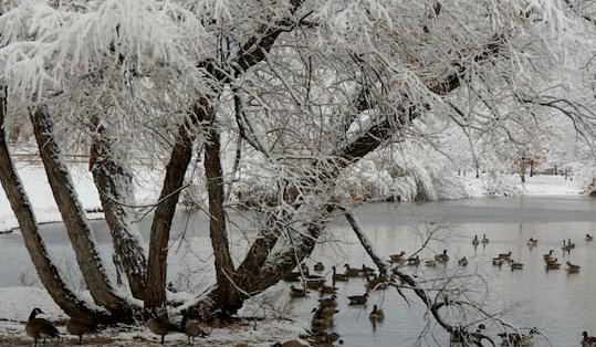 Hudson Garden winter scene