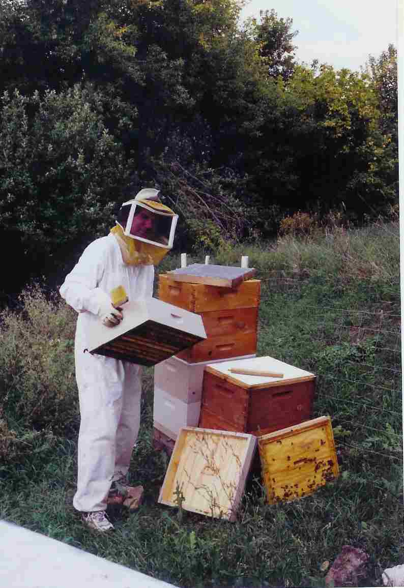 tom harvesting hives