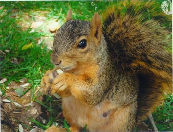 squirrel by lamb